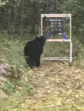Column 69 - Precious Life Bear Photo